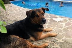Varro-at-the-pool