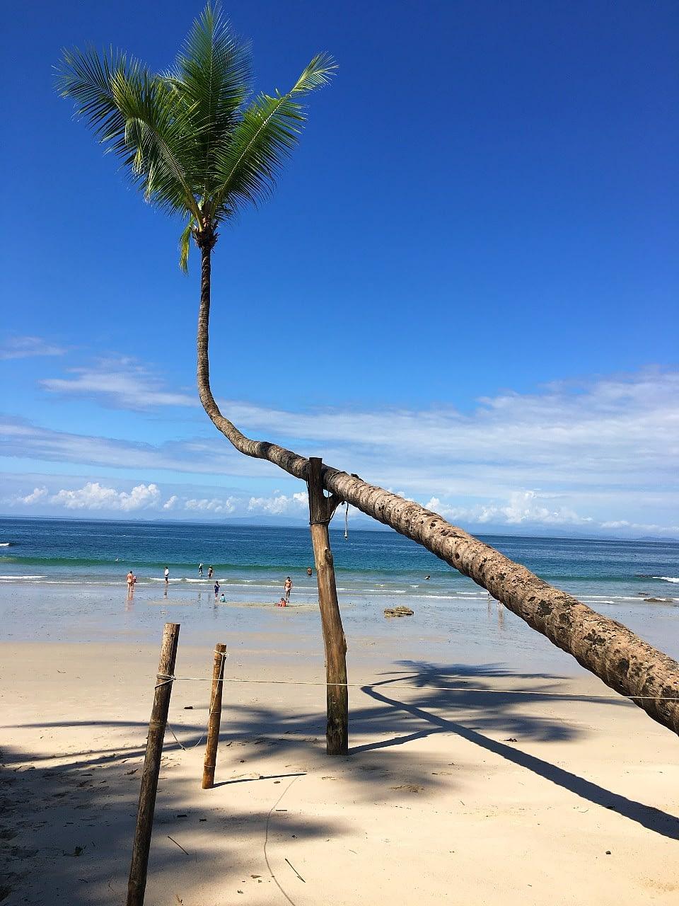 Palm Tree Playa Blanca